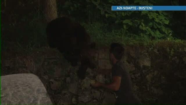 Distractie periculoasa la Busteni. Turistii dau mancare ursilor fara sa se gandeasca la riscuri