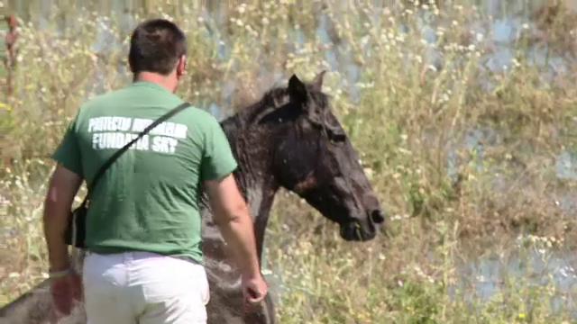 Imaginea revoltatoare a nepasarii in Romania.Un cal abandonat pe camp a fost salvat dupa o saptamana