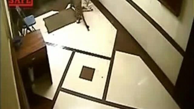 IMAGINI SOCANTE. Un leopard se strecoara intr-o locuinta si ataca un caine. VIDEO