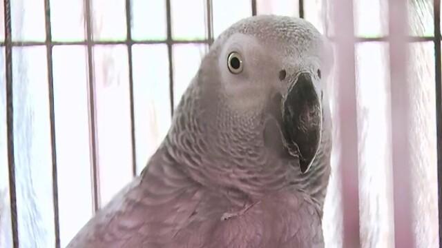 A mers la politie sa reclame ca papagalul cumparat nu ii vorbeste. Cum a ajuns un bucurestean in topul reclamatiilor trasnite