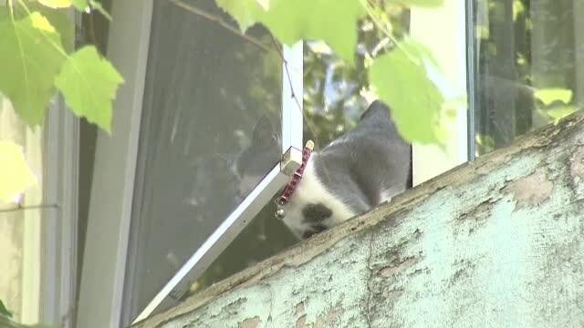pisica, geam