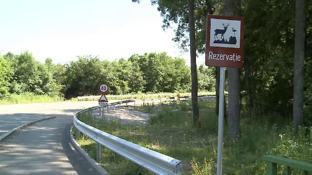 Drumul din Romania unde caprioarele au prioritate. Soferii trebuie sa incetineasca viteza si sa le permita sa traverseze