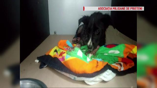 Pompierii brașoveni au salvat o cățelușă împotmolită în smoală