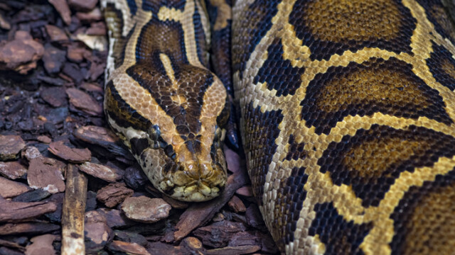 Un bărbat a murit după ce a încercat să-i facă baie șarpelui său. Ce i-au făcut vecinii