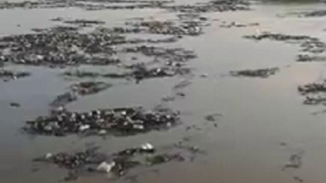 Poluare pe Dunăre. Video cu tonele de deșeuri strânse la Galați, după inundații - Imaginea 5