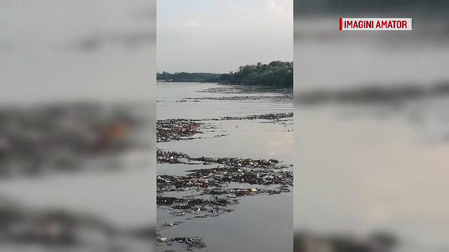 """Localități sufocate de gunoaiele venite de pe Dunăre: """"Un dezastru jalnic"""""""