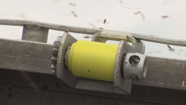 Un autocamion încărcat cu 130 de milioane de albine s-a răsturnat - Imaginea 3