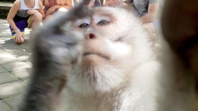 Momentul în care o maimuță strică fotografia unei familii. Gestul obscen făcut de animal