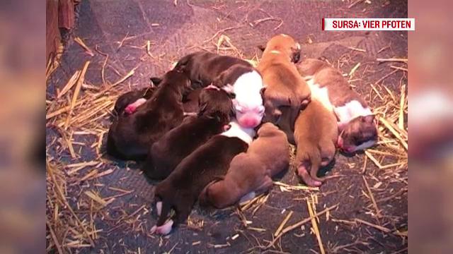 CAMERA ASCUNSĂ. Cum sunt traficate animalele de companie pe Internet - Imaginea 1