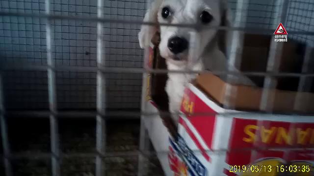 CAMERA ASCUNSĂ. Cum sunt traficate animalele de companie pe Internet - Imaginea 3