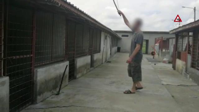 CAMERA ASCUNSĂ. Cum sunt traficate animalele de companie pe Internet - Imaginea 4