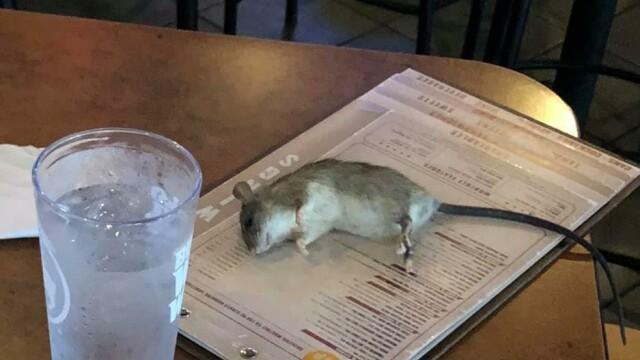 Un șobolan viu a căzut pe masa unei femei, într-un bar. FOTO - Imaginea 1