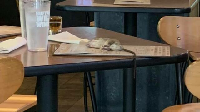 Un șobolan viu a căzut pe masa unei femei, într-un bar. FOTO - Imaginea 2