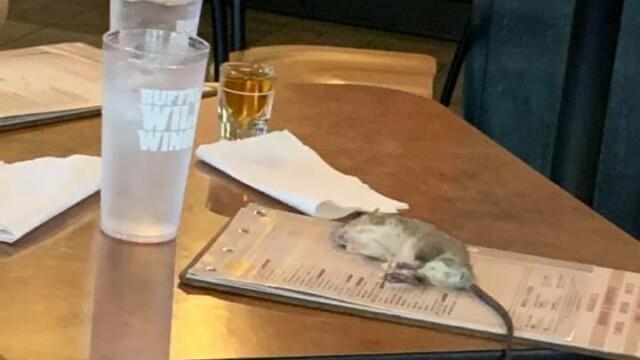 Un șobolan viu a căzut pe masa unei femei, într-un bar. FOTO - Imaginea 3