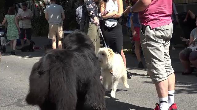 Câinii, clienţi răsfăţaţi ai unei cafenele din Târgu Mureş