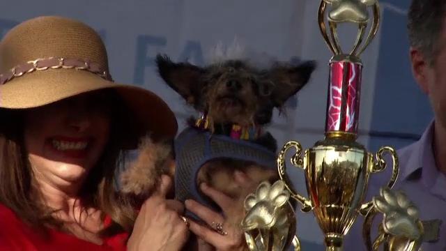 Cel mai urât căţel din lume a fost salvat de la eutanasiere - Imaginea 2