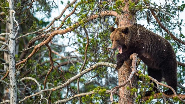 Cum arată bărbatul care a petrecut o lună în bârlogul ursului. Bestia îi fracturase coloana - Imaginea 4