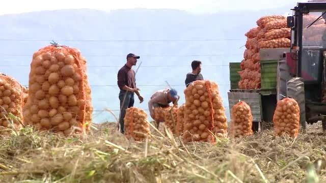 Ce sume refuză acum asistații social. Fermierii caută lucrători chinezi și vietnamezi