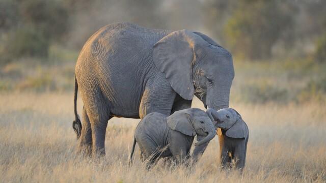 Momentul emoționant în care un pui de elefant este salvat de mai mulți voluntari, după ce a fost lovit de o motocicletă