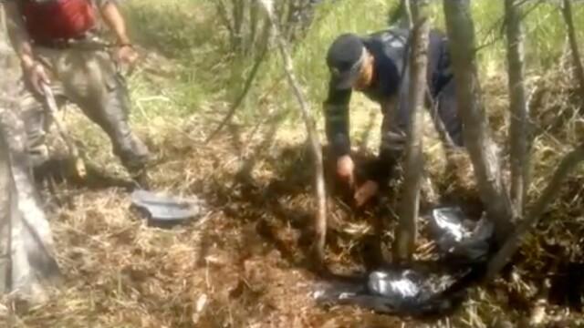 Un pescar a fost omorât și îngropat de un urs brun în Orientul Îndepărtat Rus - Imaginea 2