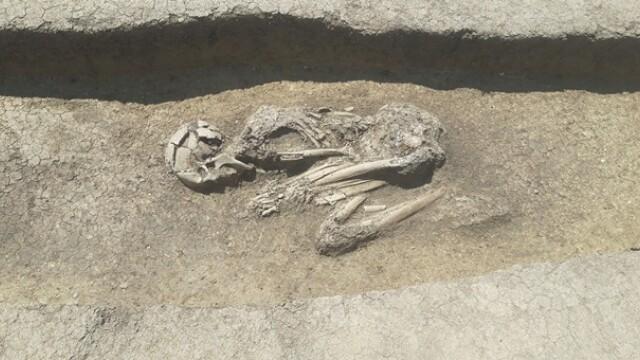 Descoperire arheologică importantă în Timișoara. Rămășițele a sute de oameni arși pe rug, găsite pe un șantier - Imaginea 1