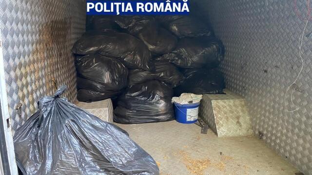 Captură record de tutun vândut ilegal, în urma unor percheziții în București și mai multe județe - Imaginea 1