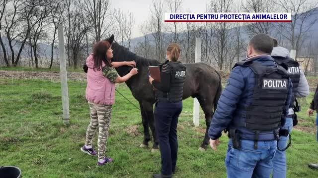 Poliția animalelor a salvat de la moarte peste 200 de suflete, în cinci luni