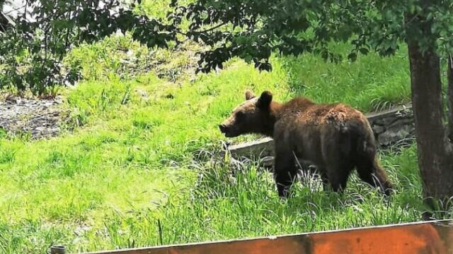 Un bărbat a fost rănit grav după ce a fost atacat de un urs, în Harghita