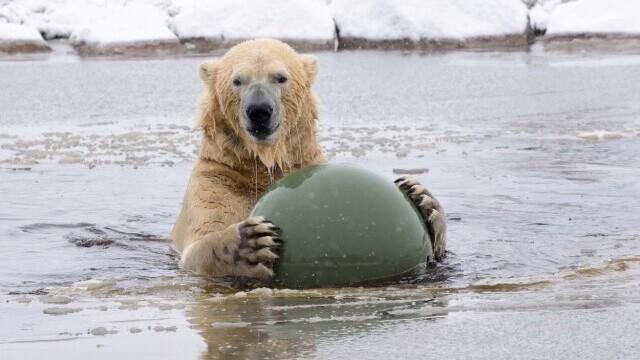 Temperaturi alarmante la Cercul Polar arctic: 48 de grade Celsius, la sol, în prima zi de vară
