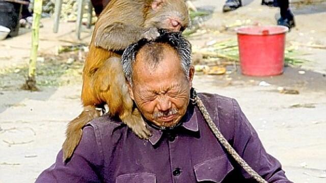 A luat-o pe coaja de la maimute! - Imaginea 1
