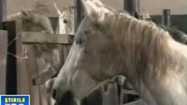 Caii de la Homorod risca sa piara! Din cauza birocratiei, cum altfel?