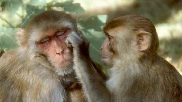 Dragoste de mama! Maimutele, la fel de afective cu puii lor, ca si oamenii!