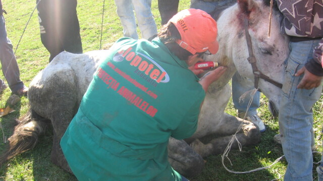 Animale maltratate