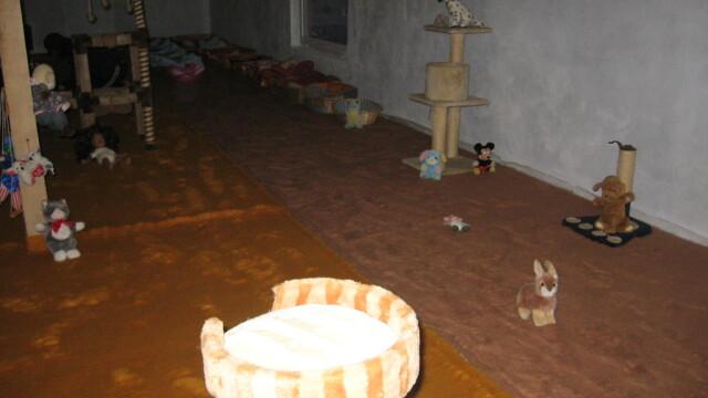 Adapost pisici