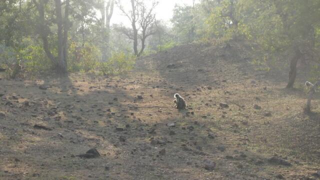 Planeta India: Kama Sutra & beyond - Imaginea 2