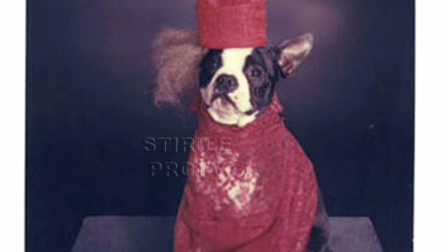 Doggie Gaga
