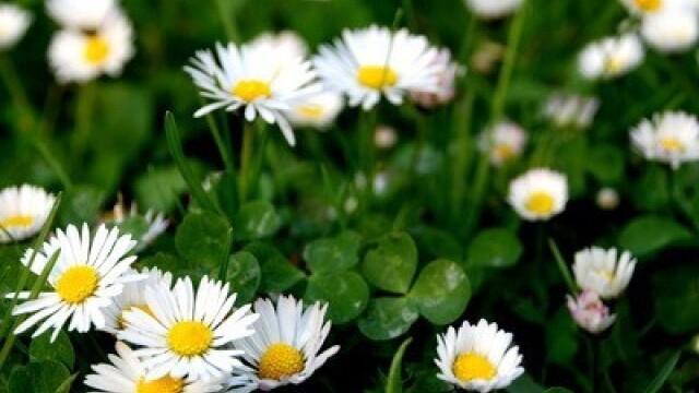flori de primavara - 3