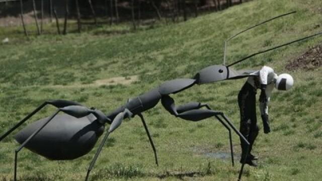 Descoperire incredibila: niste paraziti transforma furnicile in ZOMBI