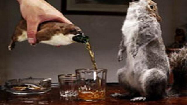 Ai bea bere imbuteliata in veverita sau bere din friptura? Exista asa ceva - Imaginea 6