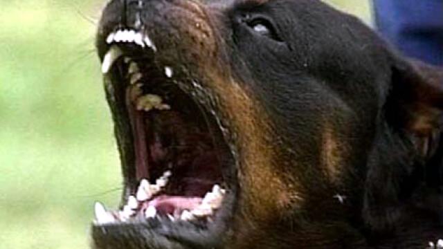 O fetita de cinci ani a fost atacata pe strada de un caine agresiv, lasat liber de stapan