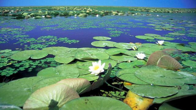 Destinatie de vis, la indemana turistilor romani. Strainii adora sa viziteze Delta Dunarii