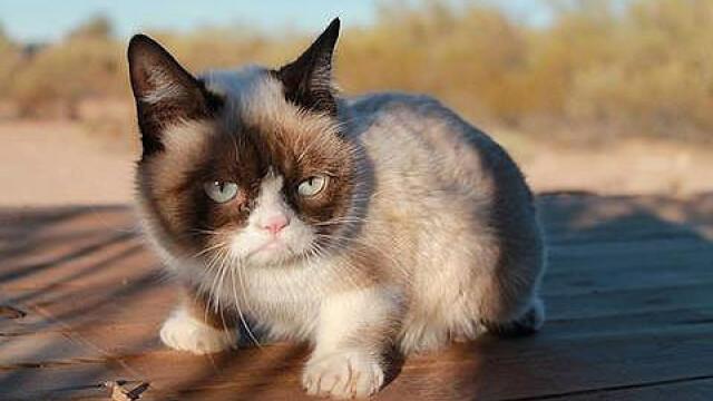 Grumpy Cat, pisica faimoasa pe internet, i-a adus proprietarei o avere de 100 de milioane de dolari