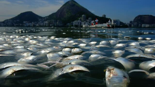 Locul unde va avea loc Olimpiada de peste 3 ani: tone de pesti morti la poalele lui Iisus in Rio - Imaginea 1