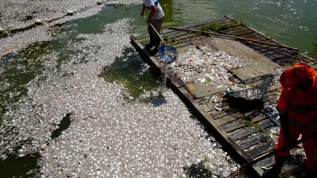Locul unde va avea loc Olimpiada de peste 3 ani: tone de pesti morti la poalele lui Iisus in Rio - Imaginea 2