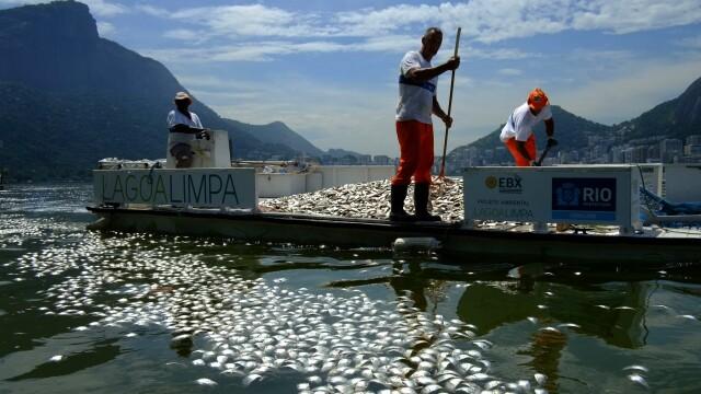 Locul unde va avea loc Olimpiada de peste 3 ani: tone de pesti morti la poalele lui Iisus in Rio - Imaginea 3