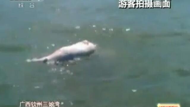 VIDEO emotionant. Un grup de delfini, surprins in timpul unei \