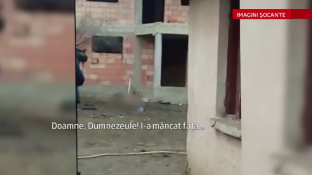 Scene de groaza in Drobeta Turnu Severin. O femeie a fost sfasiata de un pitbull, care i-a mutilat chipul