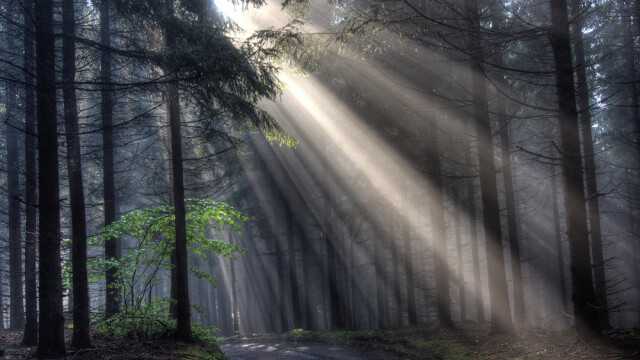 padure, raza de lumina