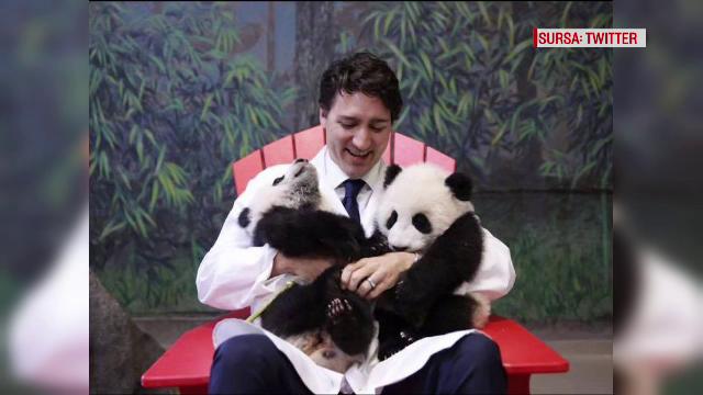 panda Justin Trudeau