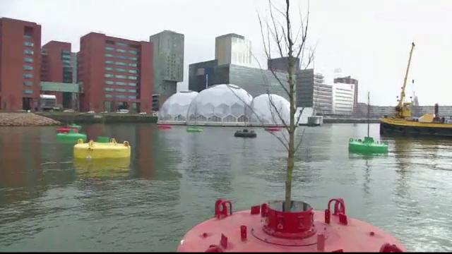 copaci plutitori